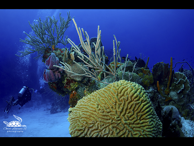 """""""Mirada profunda"""", una ventana a las maravillas submarinas"""