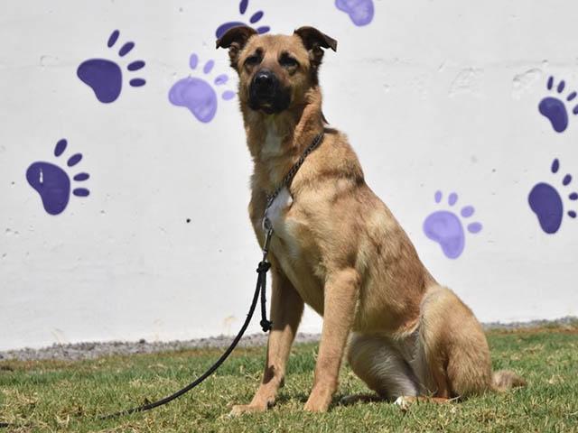 Adogpción seguirá con el reto de impulsar la adopción responsable de perros