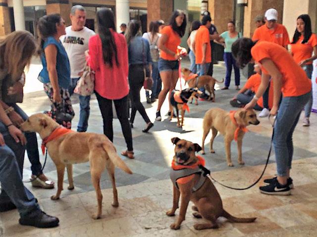 Adogpción promueve la protección animal y la tenencia responsable con feria de adopción