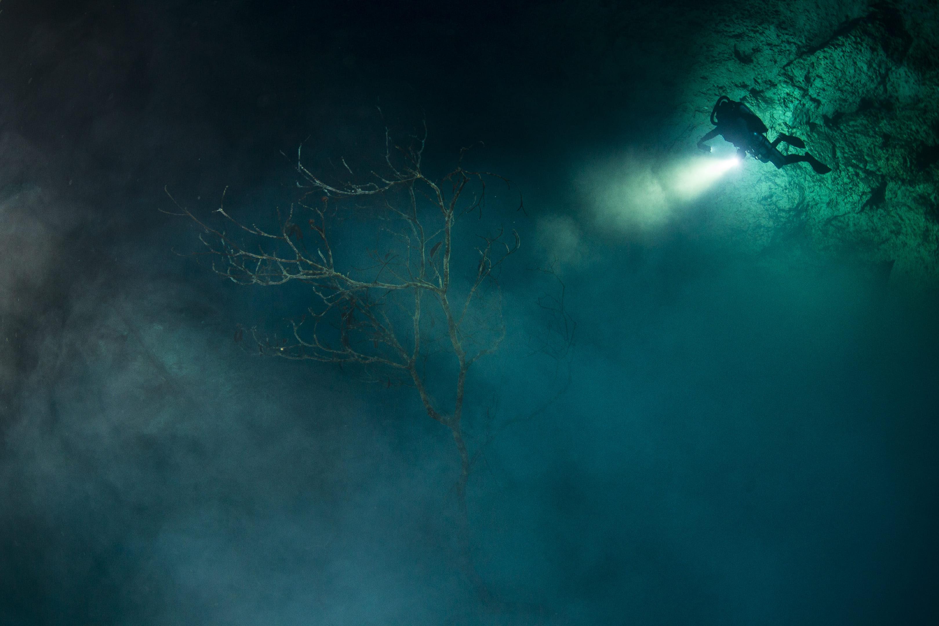 El gran acuífero maya representa a TV UNAM en festival de cine arqueológico